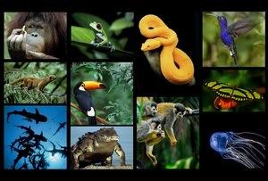 Numarul speciilor nu este limitat si nici constant