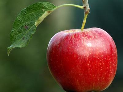 De ce Luna nu cade pe Pamant, iar merele cad