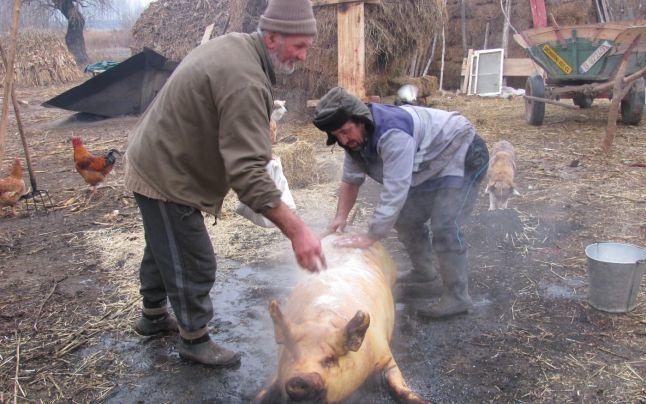 Cu porcul pe soclu