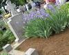 Vand loc de veci ,cimitir Tudor Vladimirescu .