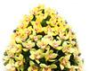 Coroana funerara din orhidee